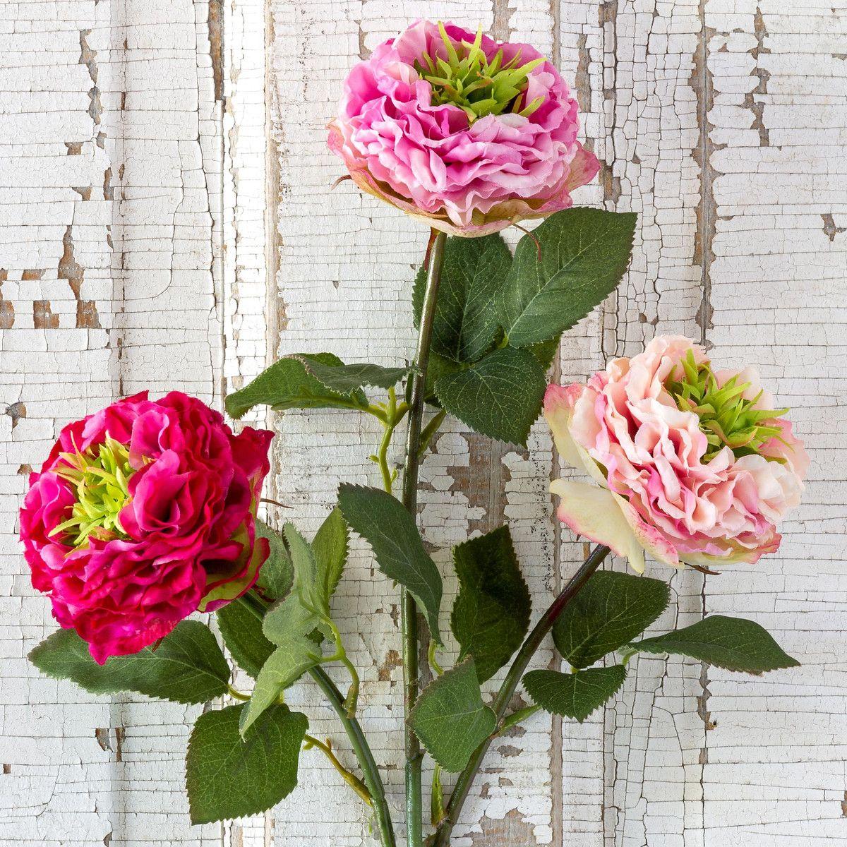 Summer Garden Rose, Pink Cerise Mix
