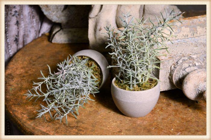 potted tiny shrub