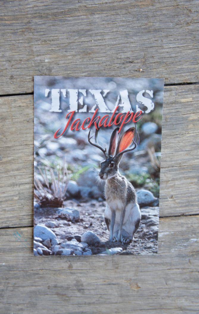texas jackalope postcard