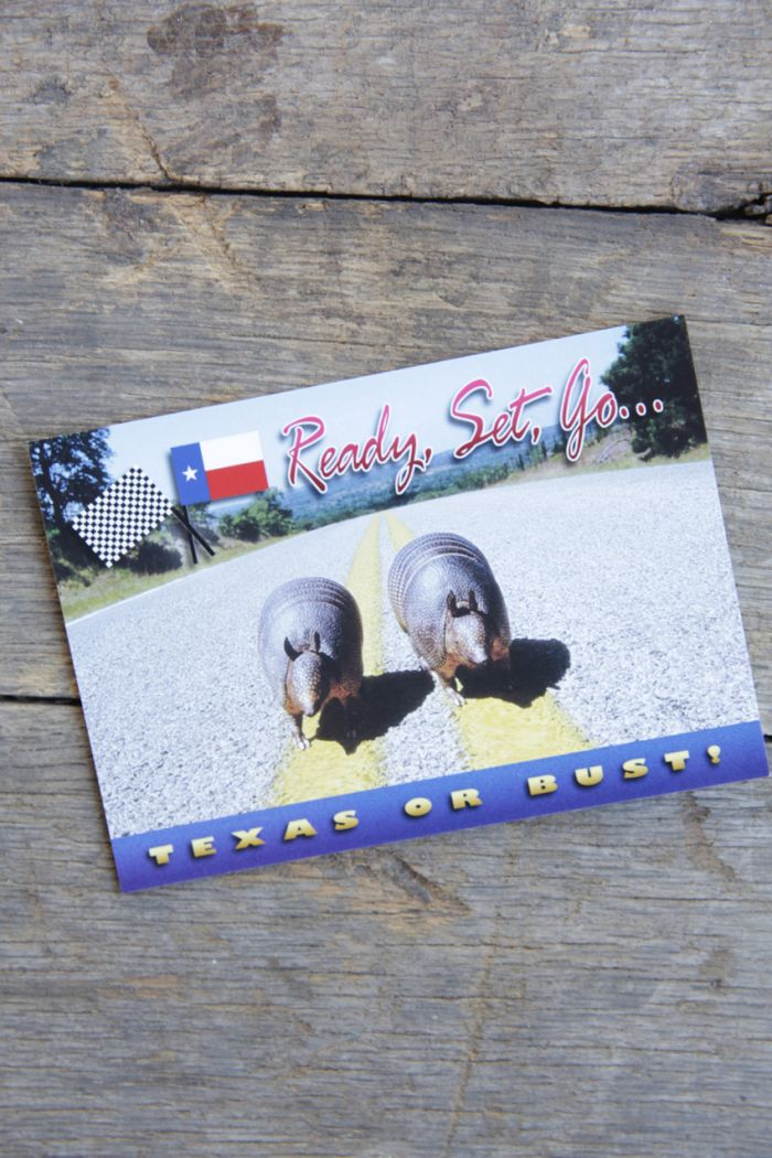 armadillos postcard