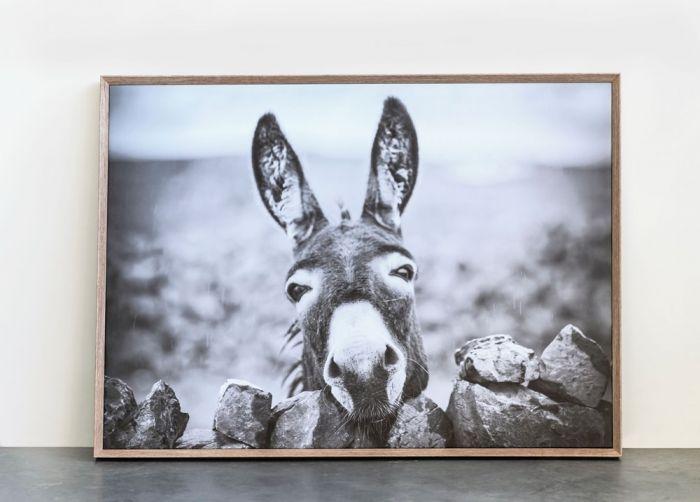 framed donkey wall decor