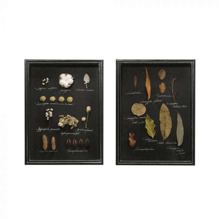 dried botanical shadow box