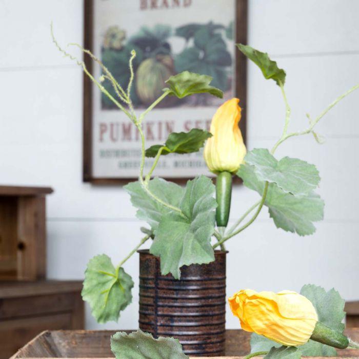 potted squash vine