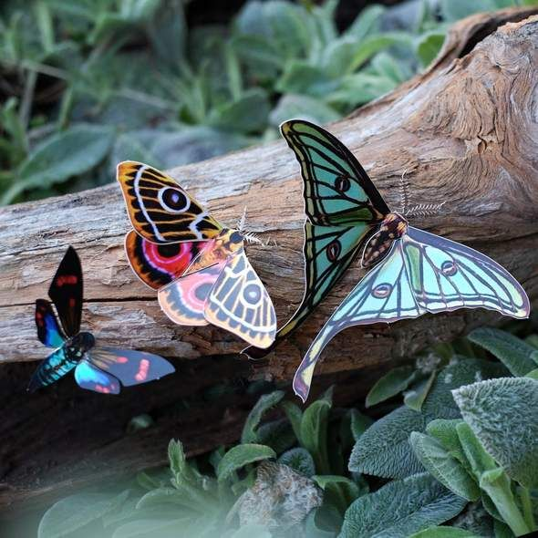 'Jade' Spanish Moon Moth Set