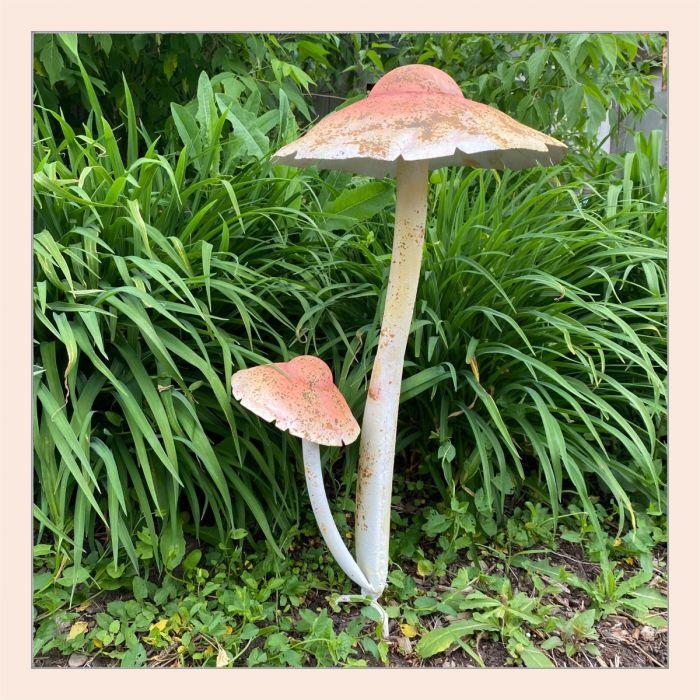 coppery mushroom cluster